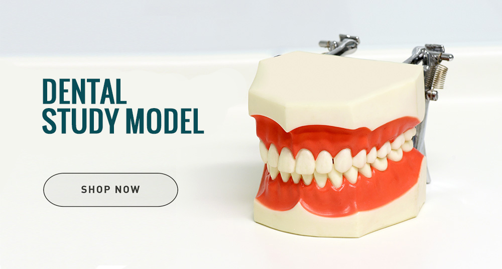 Dental Study Models